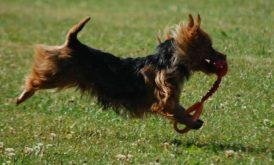 Har du en slyngel till hund kan du hjälpa oss