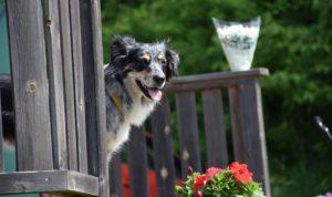 Läs mer om artikeln Hundpromenader med socialisering.