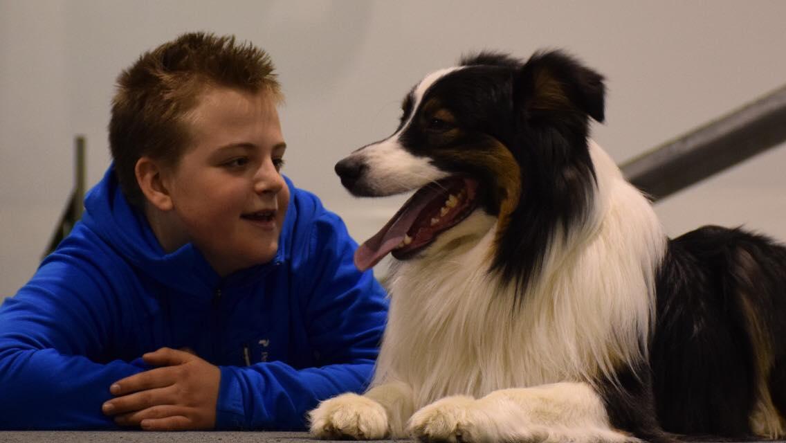 Kurs i höst för hundintresserade juniorer