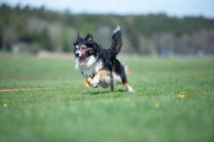Föreläsning – att träna inför tävling