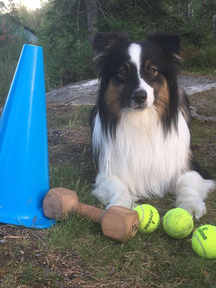 Hundintresserade juniorer @ Vallentuna Brukshundklubb | Stockholms län | Sverige