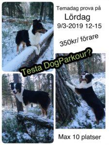 Testa på DogParkour