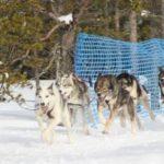 Medlemsmöte 7 mars med föredrag om draghundssporten