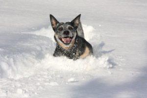 Det som göms i snö…
